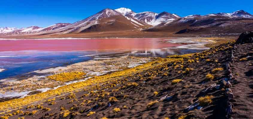 laguna colorada | SALAR DE UYUNI
