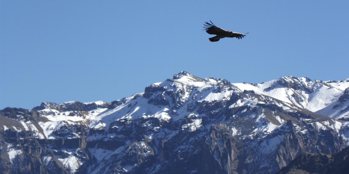 Paquete Turistico en el Cañon del Colca y Arequipa por Semana Santa