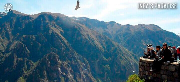 Condor en Colca en Arequipa