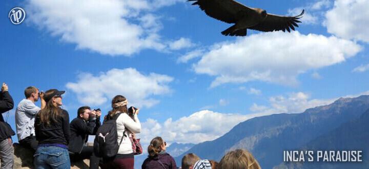 Paquete Turistico Condor en el Cañon del Colca por Fiestas Patrias en Arequipa